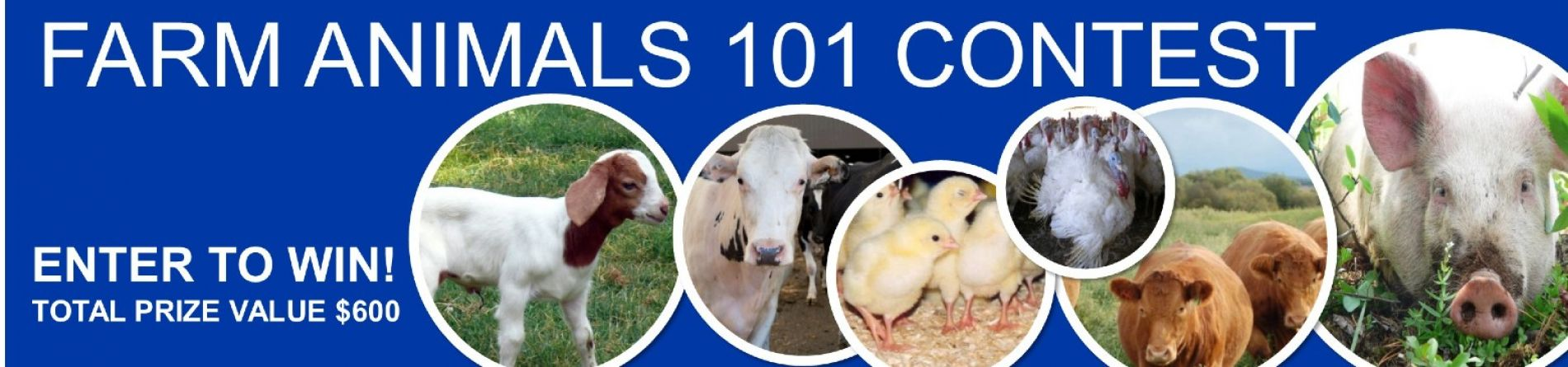 Farm Animals 101 Contest