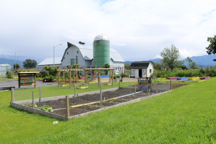 lessons from the pencil patch - a garden for learning school garden resource